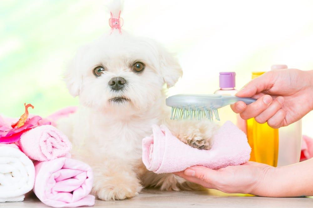 A well-groomed pooch