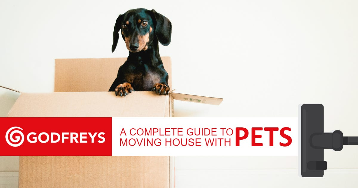 Moving house with a dog